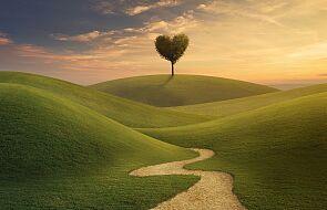 Wybierz miłość jako sposób życia