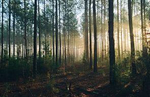 Lasy Państwowe tworzą obszary do nocowania na dziko
