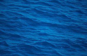 """Mężczyzna wpadł do Pacyfiku; przeżył, bo trzymał się """"oceanicznego śmiecia"""""""