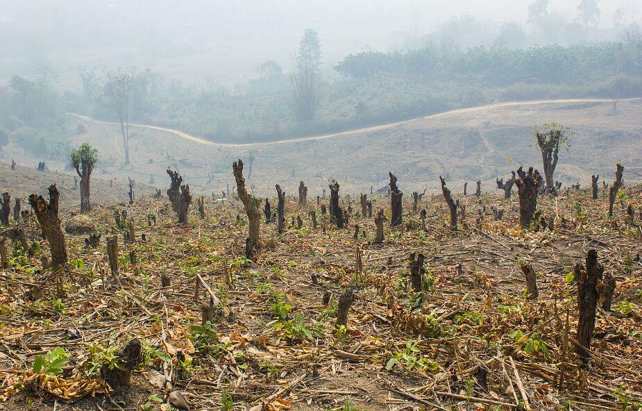Coś złego stało się z Amazonią. Emituje więcej CO2 niż go pochłania
