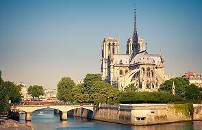 Prawie dwa tysiące dębów idzie pod topór by odbudować Notre Dame. Ekolodzy protestują