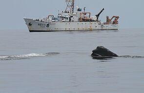 Polowanie na nielegalny odłów ryb. Użyją satelity, żeby powstrzymać morskich kłusowników