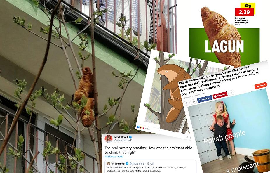 Dlaczego celebryci i media na całym świecie udostępniają zdjęcie rogala, który zawisł na drzewie w Krakowie?