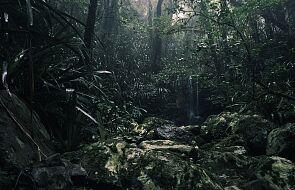 W Amazonii trwa tragedia. Jak zareaguje świat?