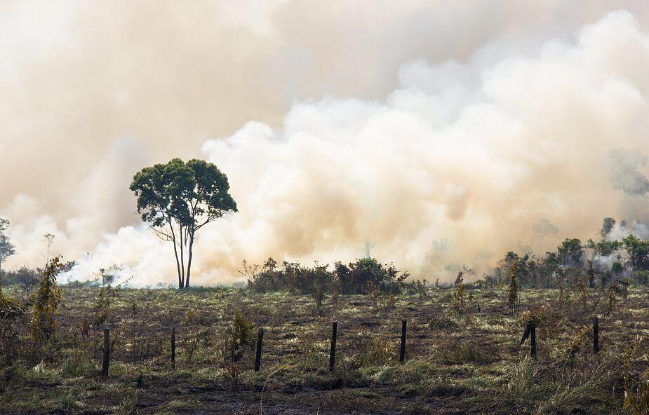 Wykryli sprawców tysięcy pożarów Puszczy Amazońskiej. Zostali zdymisjonowani