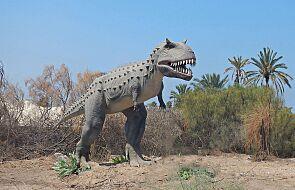 Niezwykłe odkrycie na południu Argentyny