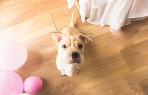 Dlaczego jedni tyją, a inni kupują psa? Taktyki na czas pandemii