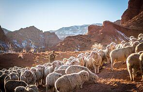Być z Pasterzem znaczy słuchać Jego głosu