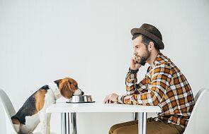 Karma dla psów może być śmiertelnym zagrożeniem dla ludzi