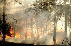 Płoną lasy w Kanadzie. Trudna sytuacja w Kolumbii Brytyjskiej
