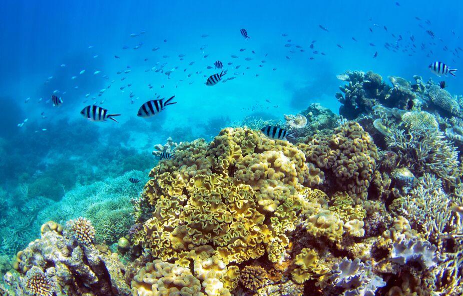 Wielka Rafa Koralowa nie trafi na listę obiektów zagrożonych UNESCO przez lobby Australii
