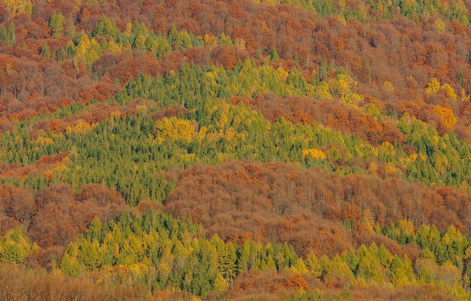 Bieszczady. Lasy bukowe trafiły na listę Światowego Dziedzictwa Przyrodniczego UNESCO