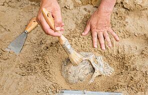 Na Śląsku IPN odnalazł szczątki sześciu osób