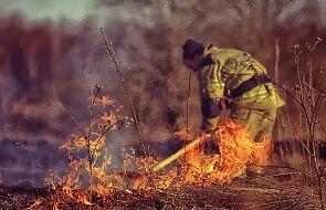 Hiszpania, Portugalia: biskupi apelują o modlitwę w sprawie ustania pożarów