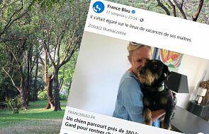 Francja. Zagubiony pies odnalazł drogę do domu. Przebiegł prawie 400 km