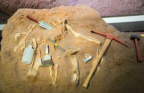 Kości słoni były używane jako narzędzia 400 tys. lat temu