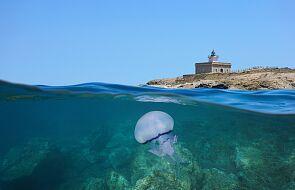 U wybrzeży Hiszpanii pojawiły się gigantyczne meduzy. Wywołały przerażenie i popłoch