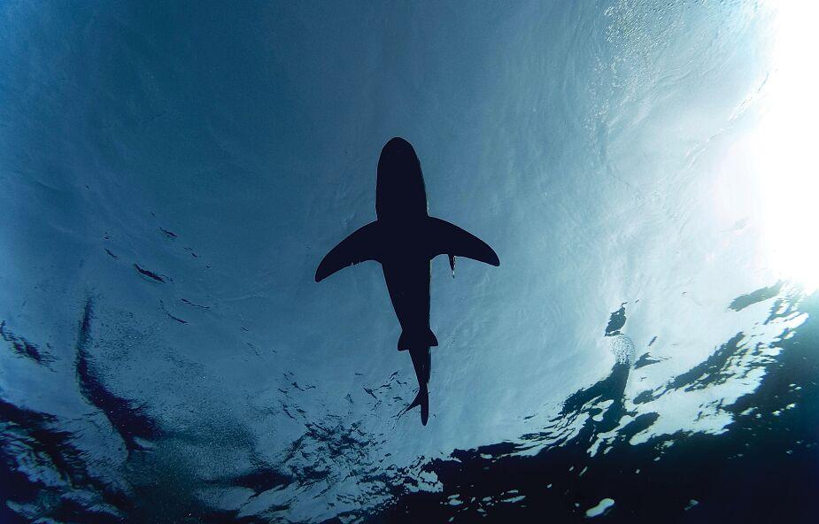 Rekiny pojawiły się u wybrzeży Portugalii. Ewakuowano setki plażowiczów