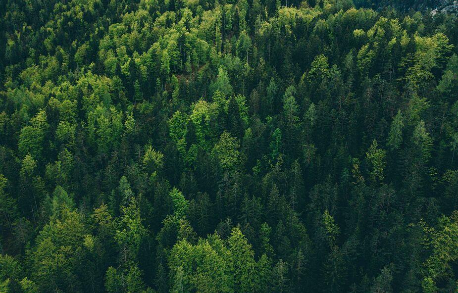 Chiny obsadzają lasami olbrzymie tereny. Ambitny plan do 2025 roku