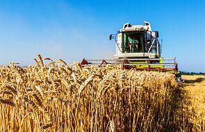 Polska na 15. miejscu na świecie. Jak rozwinęło się polskie rolnictwo