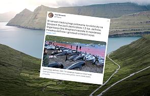 """Masakra 1,5 tys. delfinów na Wyspach Owczych. """"Największe polowanie w historii"""""""