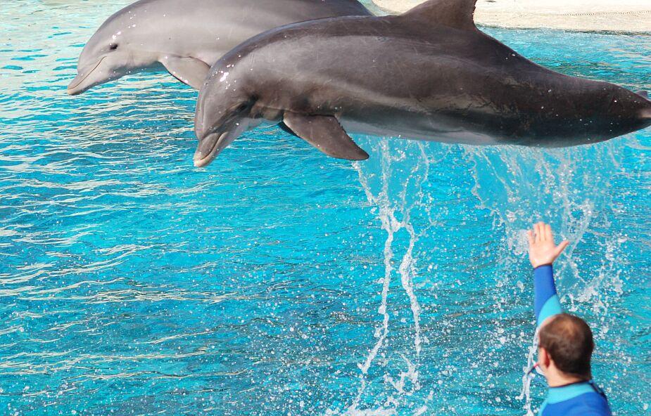 Delfiny uratowały pływaka, który przez prawie 12 godzin dryfował na wodzie