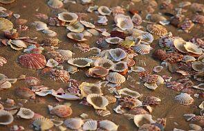 Turyści kradną piasek i muszelki z plaż Sardynii. Nie pomagają wysokie kary